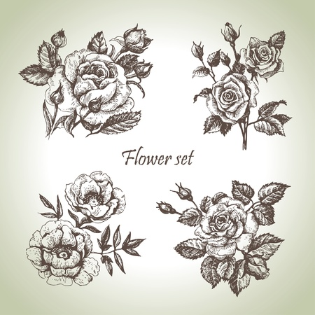 roses: Floral set. Hand drawn illustrations of roses