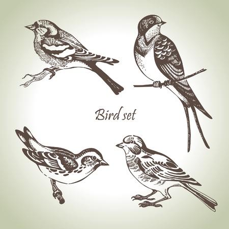 bird: 새 세트, 손으로 그린 그림 일러스트