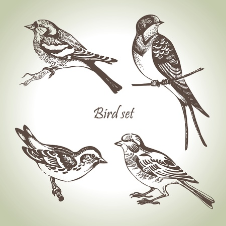 swallow bird: Bird set, hand-drawn illustration
