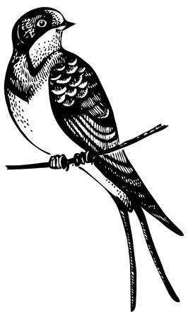 Swallow bird, hand-drawn illustration  Illustration