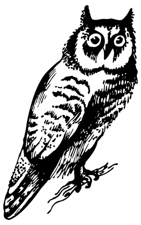 painted lines: Owl bird, hand-drawn illustration