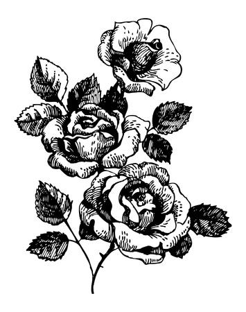 flower sketch: Roses. Hand-drawn illustration of bouquet of rose flowers  Illustration