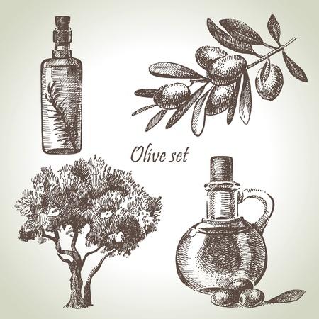 foglie ulivo: Disegnato a mano set di oliva Vettoriali