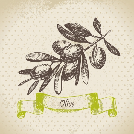 Olive  Hand drawn illustration Vector
