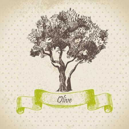 olivo arbol: Mano Olivo dibujado