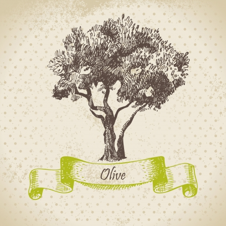 olive trees: Olive tree  Hand drawn illustration Illustration