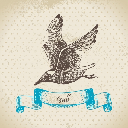 sea gull: Gull. Hand drawn illustration