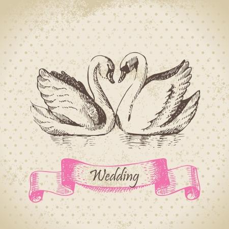 just: Swans. Wedding hand drawn illustration  Illustration