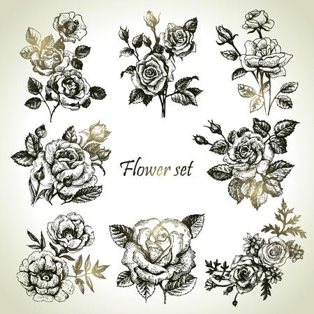 dessin fleurs: Floral ensemble. Illustrations dessinées à la main des roses