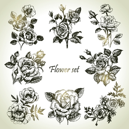 hand drawn flower: Floral set. Hand drawn illustrations of roses  Illustration