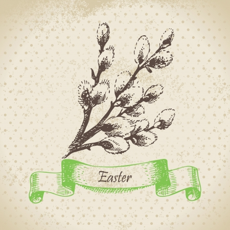 Vintage Easter background with pussy-willow. Hand drawn illustration Stock Vector - 18002414