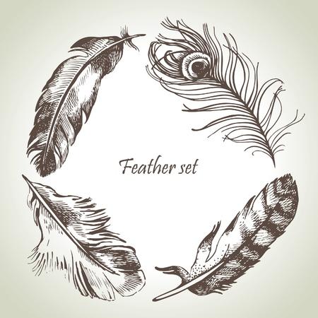 Ensemble de plumes. Illustrations dessinées à la main