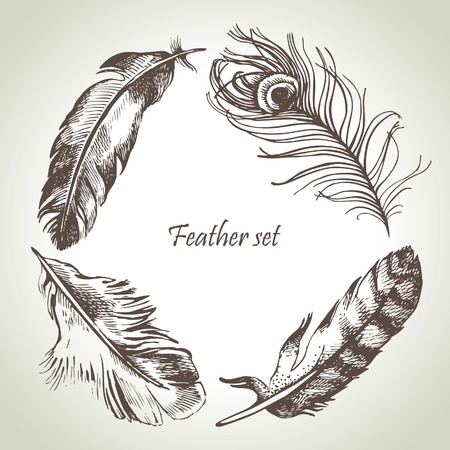 pluma blanca: Feather set. Dibujado a mano ilustraciones Vectores