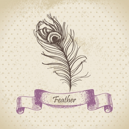Vintage background with peacock feather. Hand drawn illustration  Vector