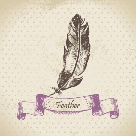 quill pen: Vintage background with feather. Hand drawn illustration
