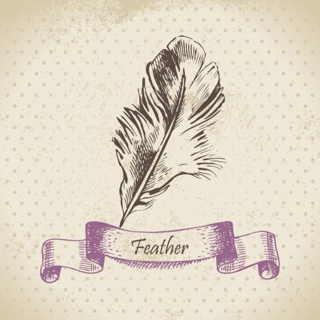 Vintage background with feather. Hand drawn illustration Stock Vector - 18002430