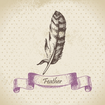 Vintage background with feather. Hand drawn illustration  Vector