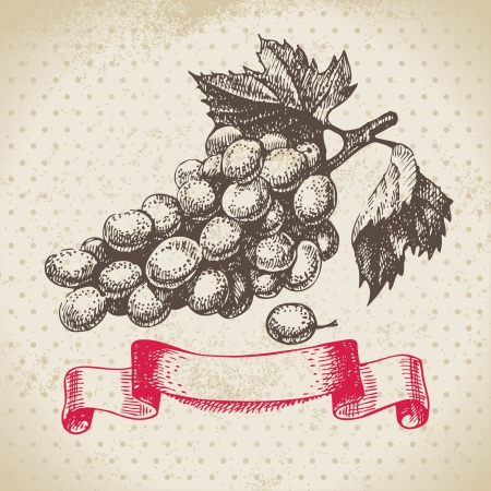 Wine vintage background with grapes. Hand drawn illustration Stock Vector - 20472613