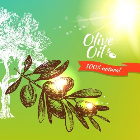 olive oil bottle: Vintage olive background. Hand drawn illustration