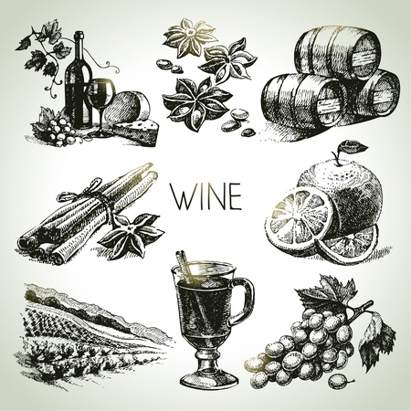 grapes wine: Hand drawn vector wine set