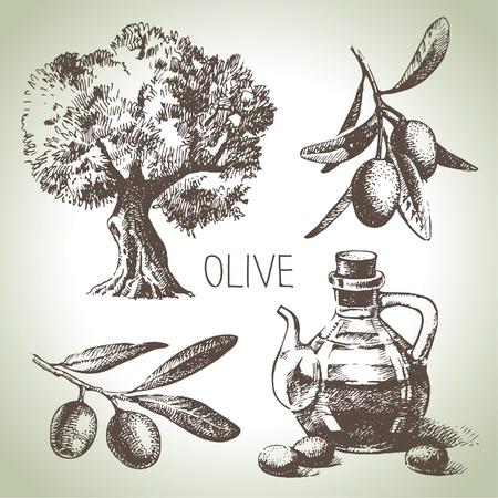 olivo arbol: Dibujado a mano conjunto de oliva