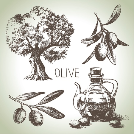 olive tree isolated: Hand drawn olive set
