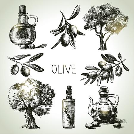 aceite de oliva: Dibujado a mano conjunto de oliva