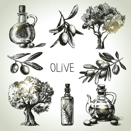 kitchen illustration: Hand drawn olive set