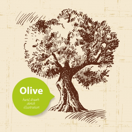 hand tree: Vintage olive background. Hand drawn illustration
