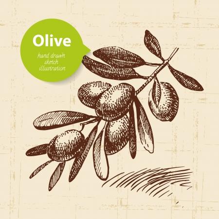 rama de olivo: Vintage fondo de oliva. Dibujado a mano ilustraci?n Vectores