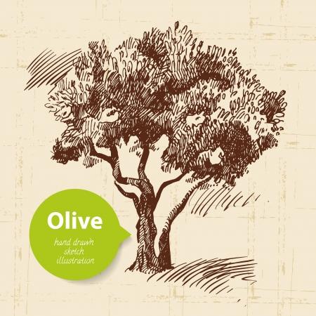 �rbol olivo: Vintage fondo de oliva. Dibujado a mano ilustraci?n Vectores