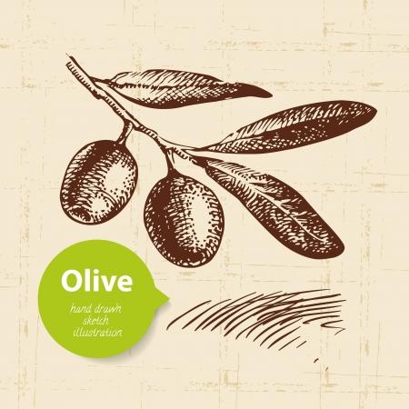 olive leaf: Vintage fondo de oliva. Dibujado a mano ilustraci?n Vectores