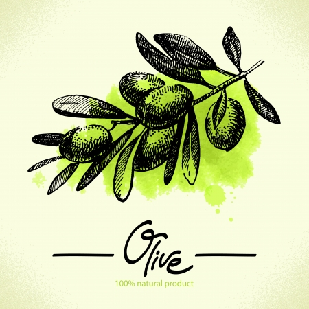 cooking oil: Hand drawn olive illustration with watercolor back  Illustration