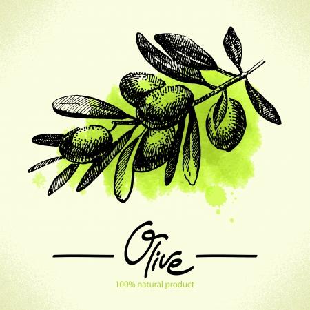 olijf: Hand getrokken illustratie olijf met waterverf terug Stock Illustratie