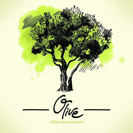 hand tree: Hand drawn olive illustration with watercolor back  Illustration