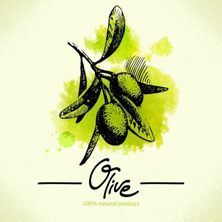 Main dessin�e illustration d'olive avec de l'aquarelle arri�re