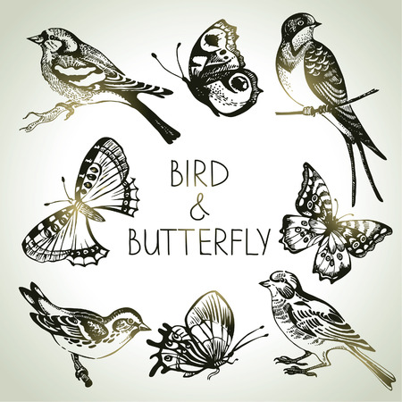 Bird and butterfly set, hand drawn illustrations  Ilustracja