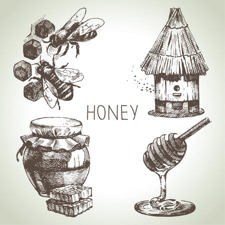 miel de abeja: Conjunto Miel. Dibujado a mano ilustraciones de época