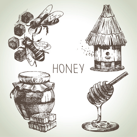 honey bee: Honey set. Hand drawn vintage illustrations  Illustration