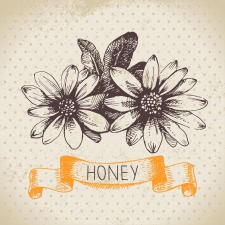 miel de abeja: Fondo de la miel con la mano dibuja la ilustraci�n boceto
