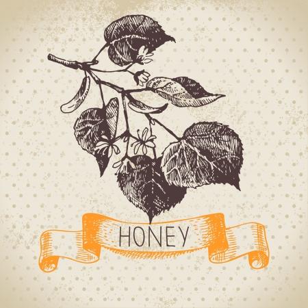 linden: Honey background with hand drawn sketch illustration