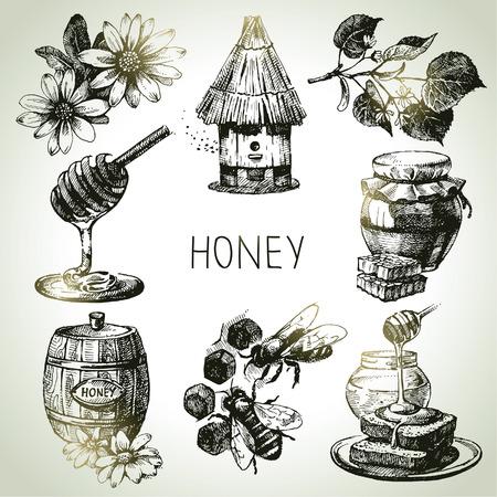 abejas panal: Conjunto Miel. Dibujado a mano ilustraciones de �poca