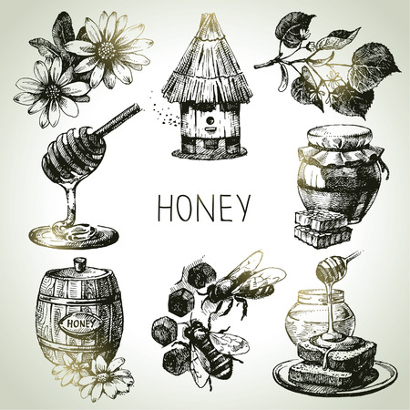 bees: Honey set. Hand drawn vintage illustrations