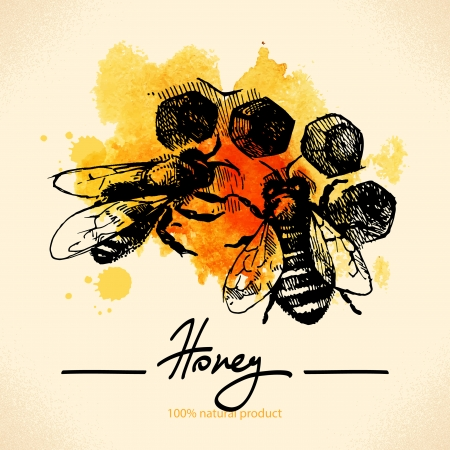 Honey with hand drawn sketch and watercolor illustration Ilustração