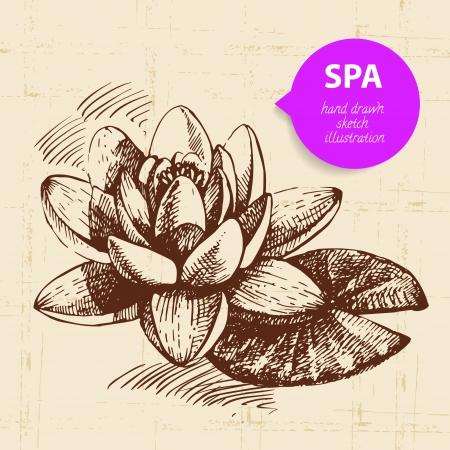 lily leaf: Spa background. Vintage hand drawn sketch illustration