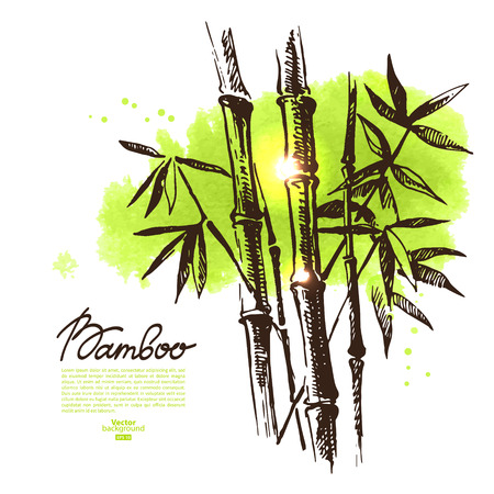 Background with hand drawn sketch bamboo and watercolor blot. Vector illustration