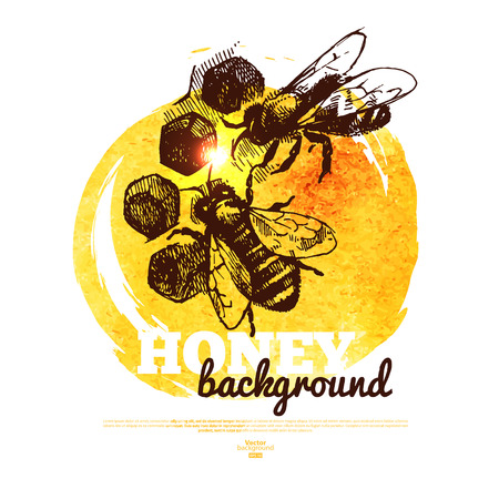 honeyed: Honey banner with hand drawn sketch and watercolor illustration