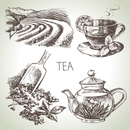 Hand drawn sketch vector tea set  Иллюстрация