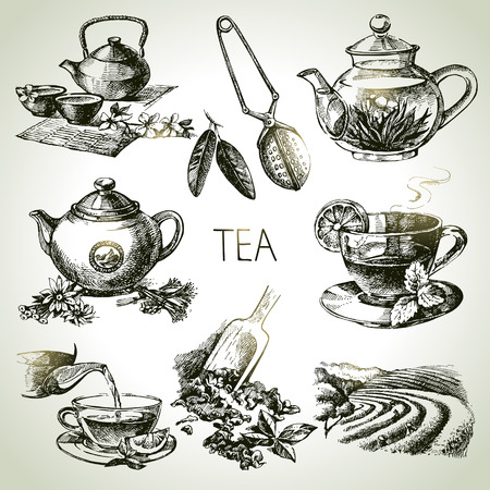 mint leaves: Hand drawn sketch vector tea set  Illustration
