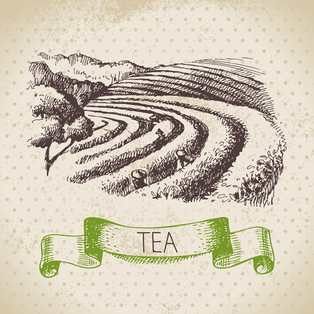 Tea vintage background. Hand drawn sketch illustration. Menu design Stok Fotoğraf - 26866022